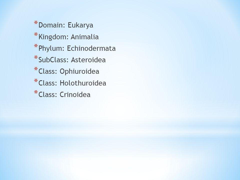 * Domain: Eukarya * Kingdom: Animalia * Phylum: Echinodermata * SubClass: Asteroidea * Class: Ophiuroidea * Class: Holothuroidea * Class: Crinoidea