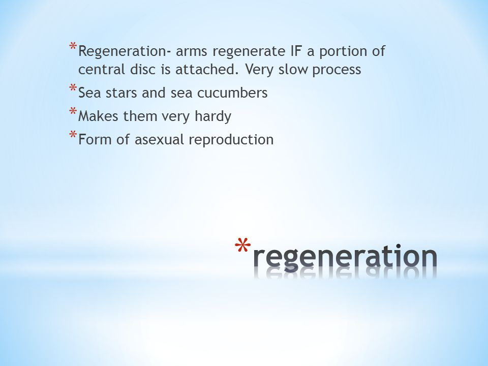 * Regeneration- arms regenerate IF a portion of central disc is attached.