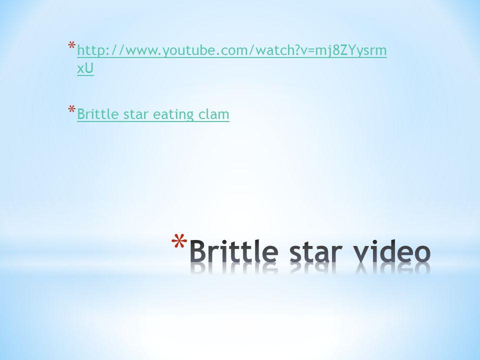 * http://www.youtube.com/watch v=mj8ZYysrm xU http://www.youtube.com/watch v=mj8ZYysrm xU * Brittle star eating clam Brittle star eating clam