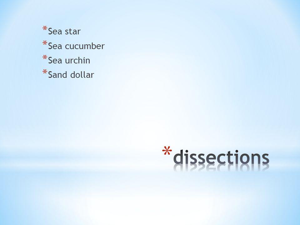 * Sea star * Sea cucumber * Sea urchin * Sand dollar