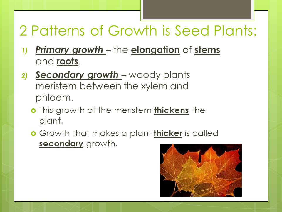 2 Patterns of Growth is Seed Plants: 1) Primary growth – the elongation of stems and roots. 2) Secondary growth – woody plants meristem between the xy