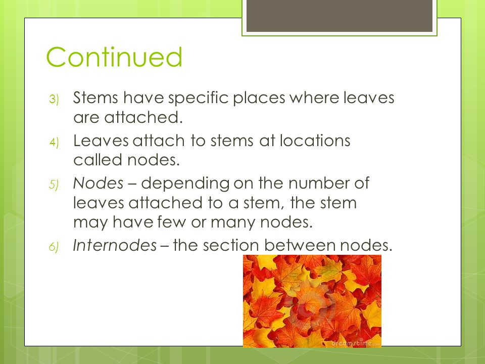 Continued 3) Stems have specific places where leaves are attached.