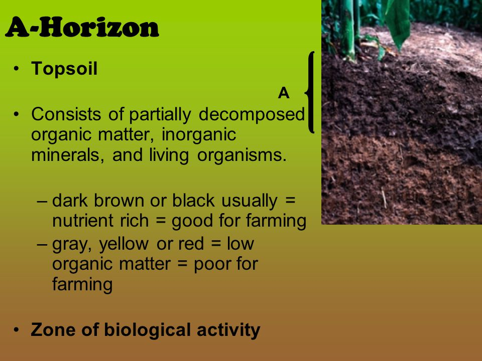 E horizon – not always present or noted Zone of leaching A zone present in acidic soils, –either between the O and A horizon or below the A horizon –always above the B horizon Nutrients and minerals move quickly through this layer are deposited in the B horizon