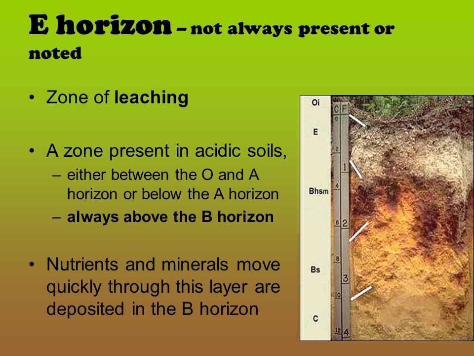 B-Horizon Sub Soil Mostly inorganic – rich in Fe, Al, and humic compounds Nutrients leached down from A horizon Almost no organic matter Roots may extend into this layer Yellow = alum oxides Red = iron oxides White = calcium carbonate