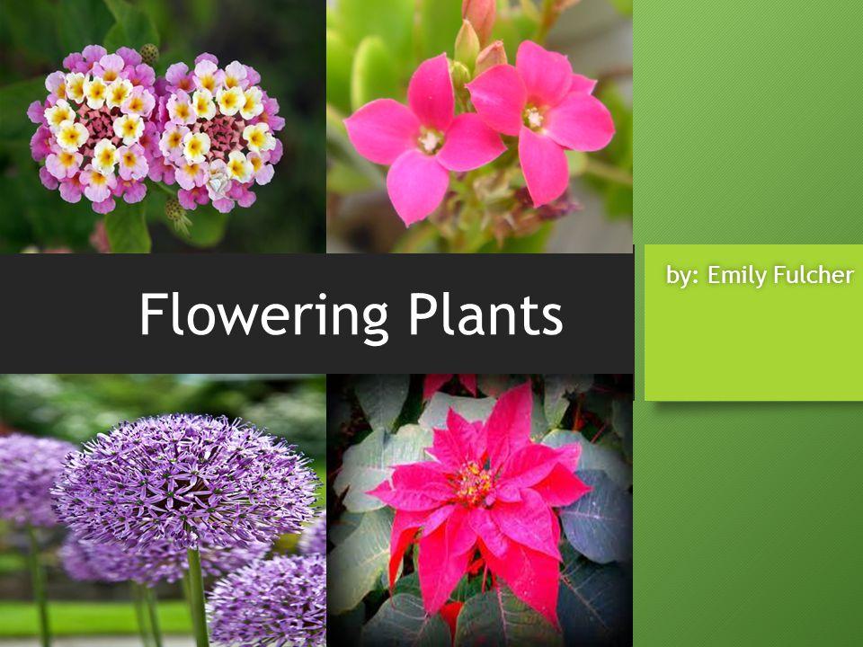 Flowering Plants by: Emily Fulcherby: Emily Fulcher