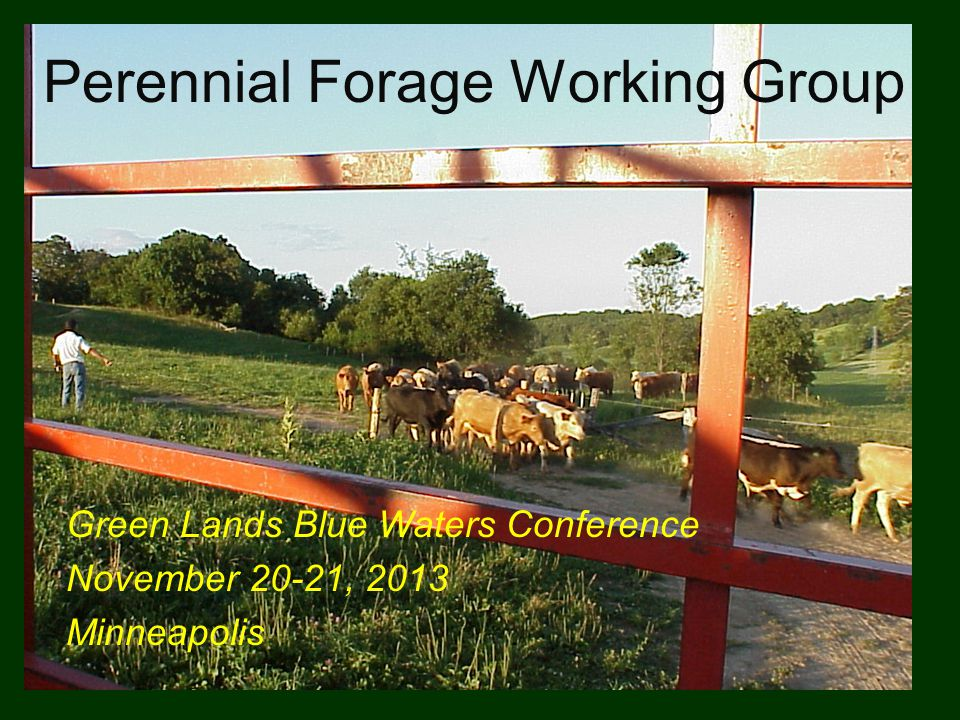Perennial Forage Working Group Green Lands Blue Waters Conference November 20-21, 2013 Minneapolis