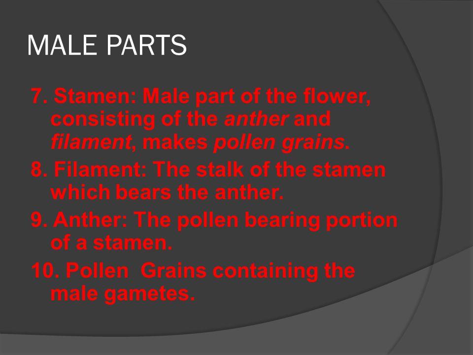 FEMALE PARTS 11.Carpel\Pistil: Female part of the flower.