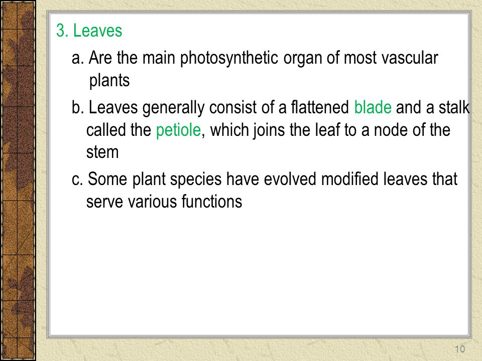 3. Leaves a. Are the main photosynthetic organ of most vascular plants b. Leaves generally consist of a flattened blade and a stalk called the petiole