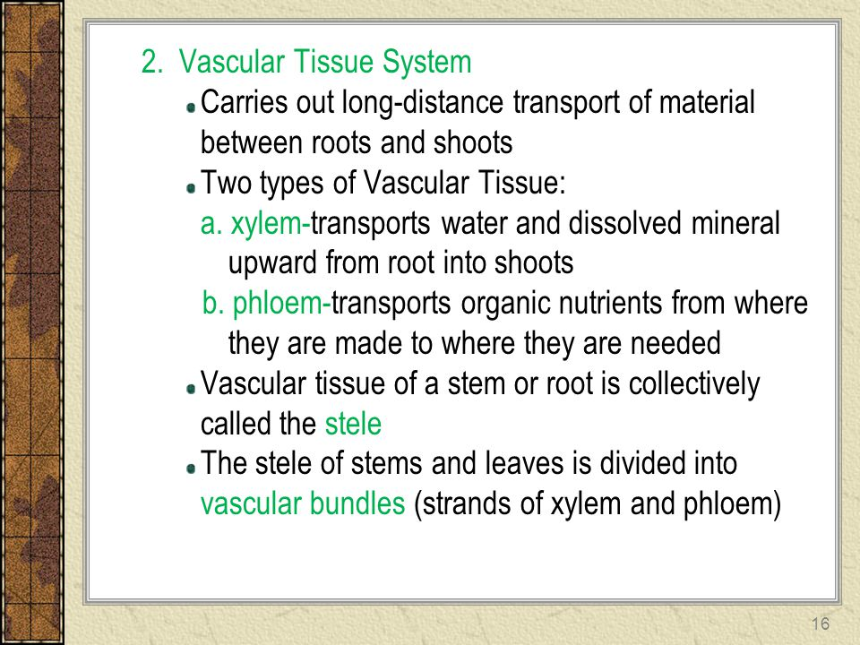 2. Vascular Tissue System Carries out long-distance transport of material between roots and shoots Two types of Vascular Tissue: a. xylem-transports w