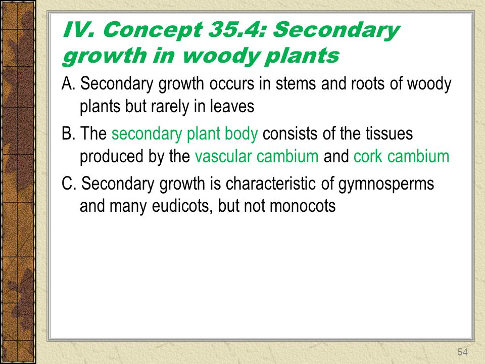 IV. Concept 35.4: Secondary growth in woody plants A. Secondary growth occurs in stems and roots of woody plants but rarely in leaves B. The secondary