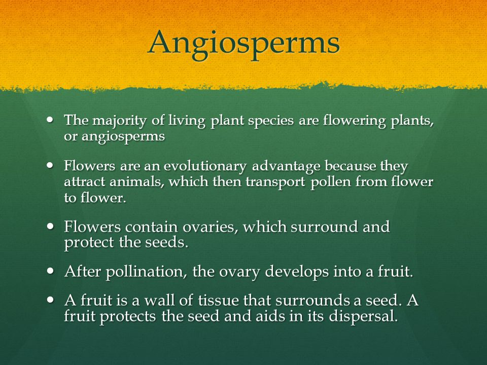 Angiosperms The majority of living plant species are flowering plants, or angiosperms The majority of living plant species are flowering plants, or an