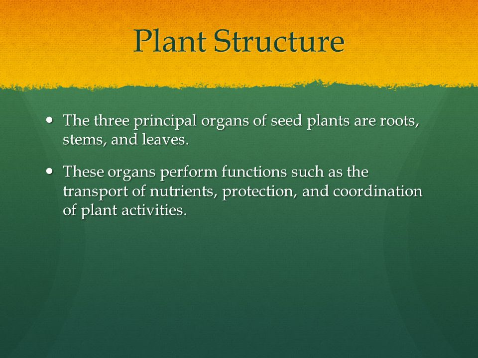 Plant Structure The three principal organs of seed plants are roots, stems, and leaves. The three principal organs of seed plants are roots, stems, an