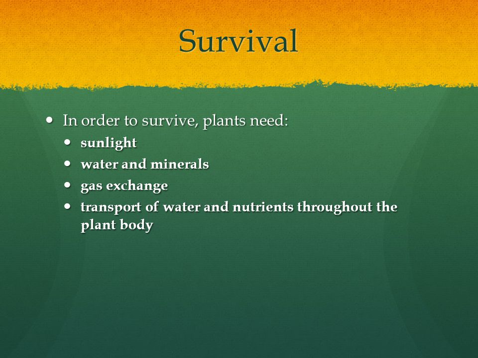 Survival In order to survive, plants need: In order to survive, plants need: sunlight sunlight water and minerals water and minerals gas exchange gas
