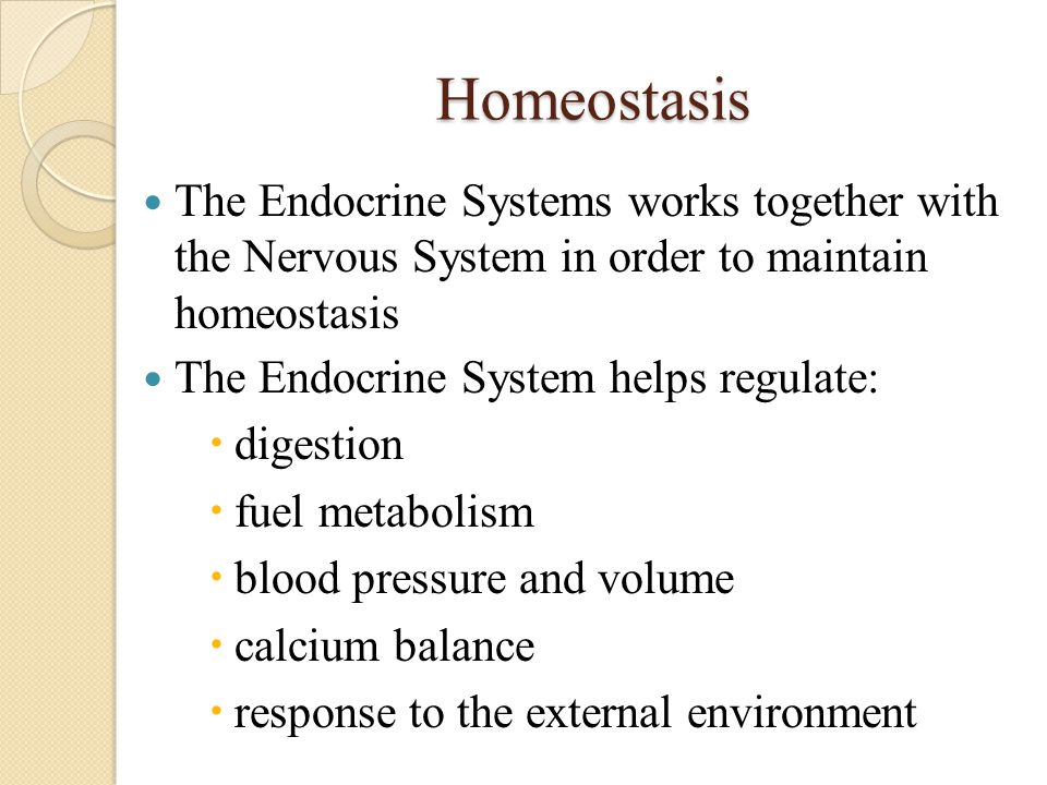 Homeostasis The Endocrine Systems works together with the Nervous System in order to maintain homeostasis The Endocrine System helps regulate:  diges