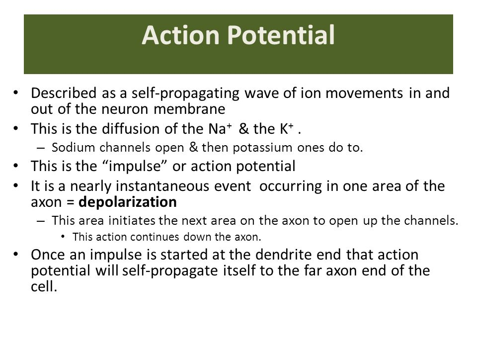 Action Potential Described as a self-propagating wave of ion movements in and out of the neuron membrane This is the diffusion of the Na + & the K +.