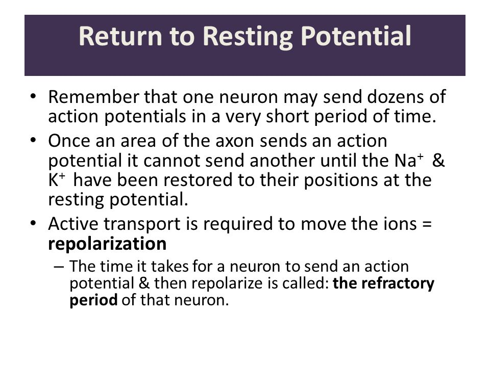 Return to Resting Potential Remember that one neuron may send dozens of action potentials in a very short period of time. Once an area of the axon sen