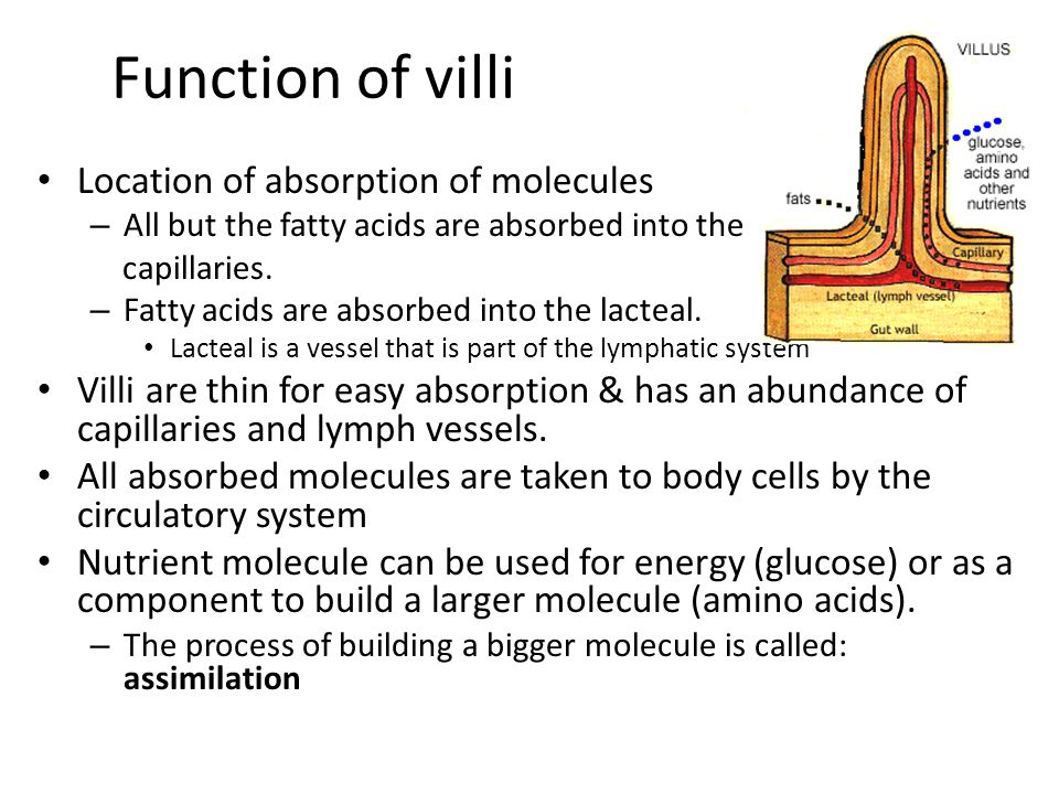Function of villi Location of absorption of molecules – All but the fatty acids are absorbed into the capillaries. – Fatty acids are absorbed into the