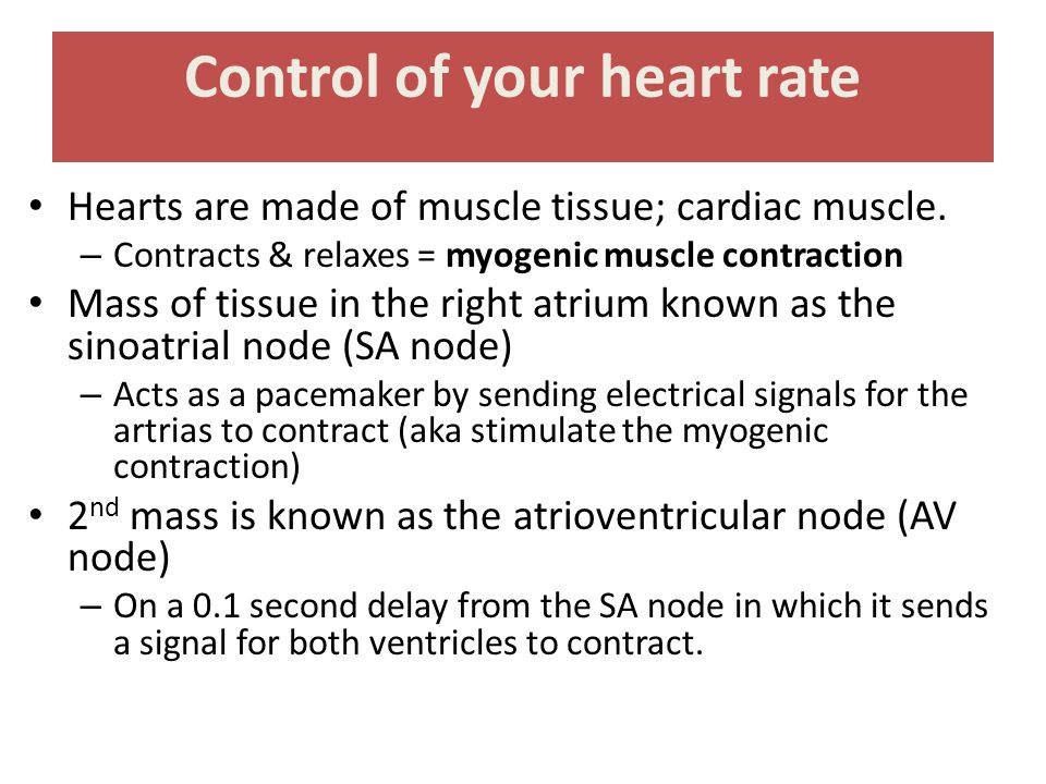 Control of your heart rate Hearts are made of muscle tissue; cardiac muscle. – Contracts & relaxes = myogenic muscle contraction Mass of tissue in the