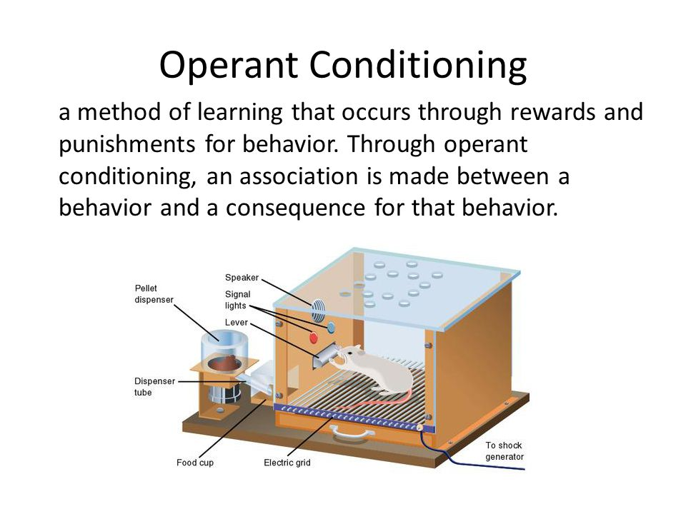 Operant Conditioning a method of learning that occurs through rewards and punishments for behavior. Through operant conditioning, an association is ma
