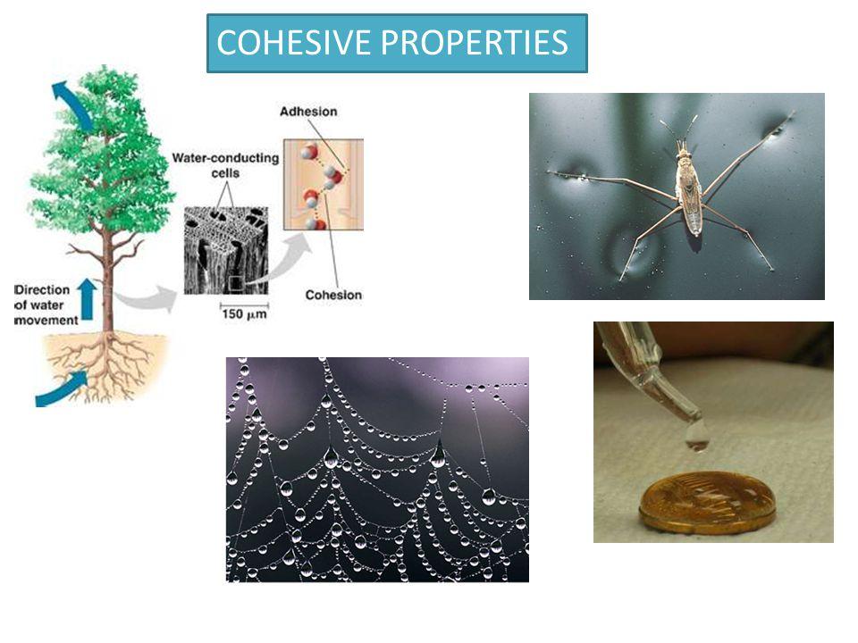 COHESIVE PROPERTIES