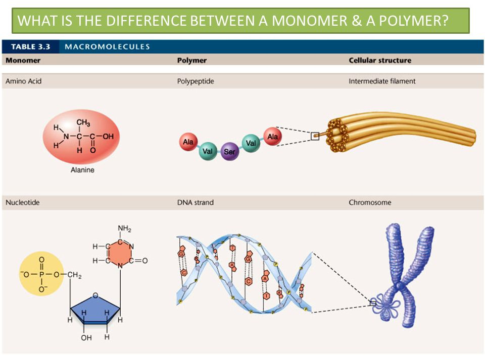 WHAT IS THE DIFFERENCE BETWEEN A MONOMER & A POLYMER?