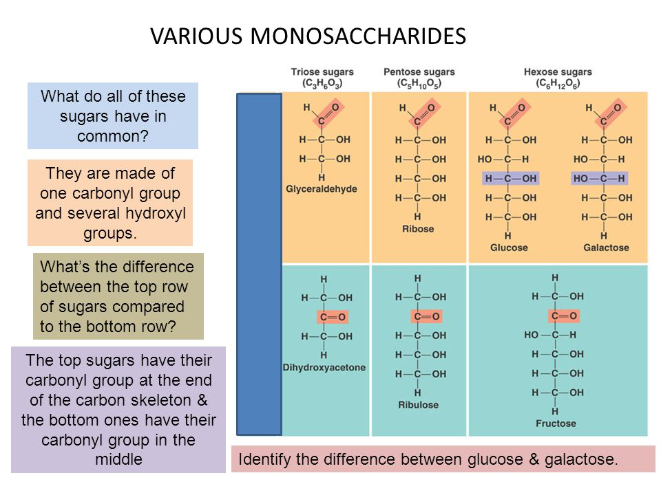 VARIOUS MONOSACCHARIDES What do all of these sugars have in common? They are made of one carbonyl group and several hydroxyl groups. What's the differ