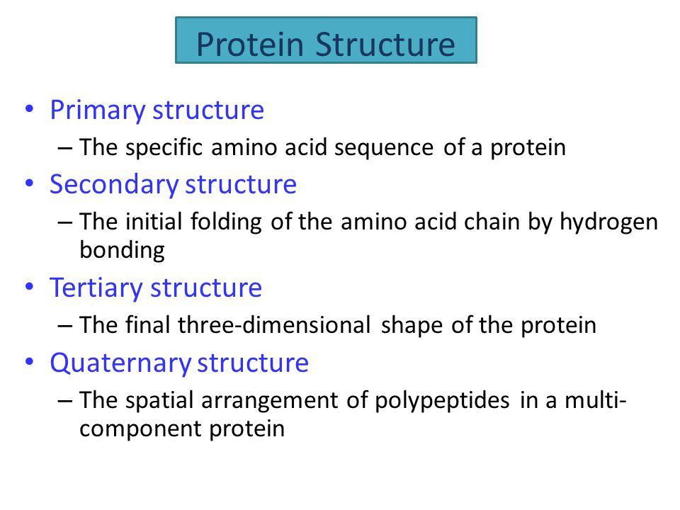 Primary structure – The specific amino acid sequence of a protein Secondary structure – The initial folding of the amino acid chain by hydrogen bondin