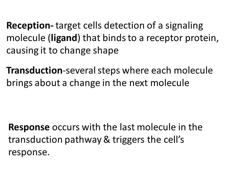 Reception- target cells detection of a signaling molecule (ligand) that binds to a receptor protein, causing it to change shape Transduction-several s