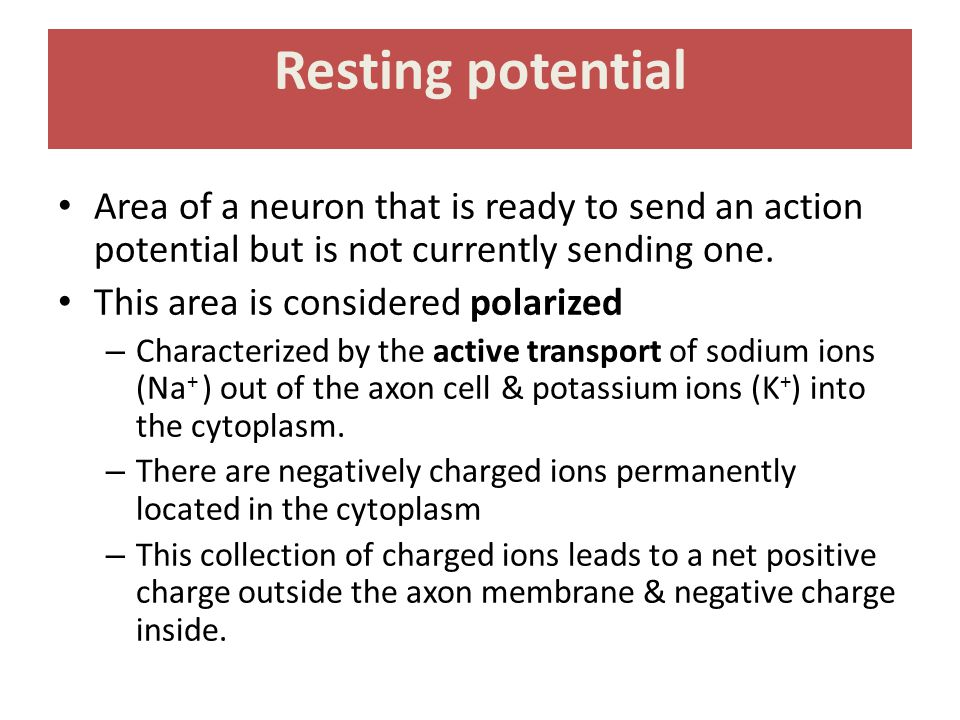 Resting potential Area of a neuron that is ready to send an action potential but is not currently sending one. This area is considered polarized – Cha