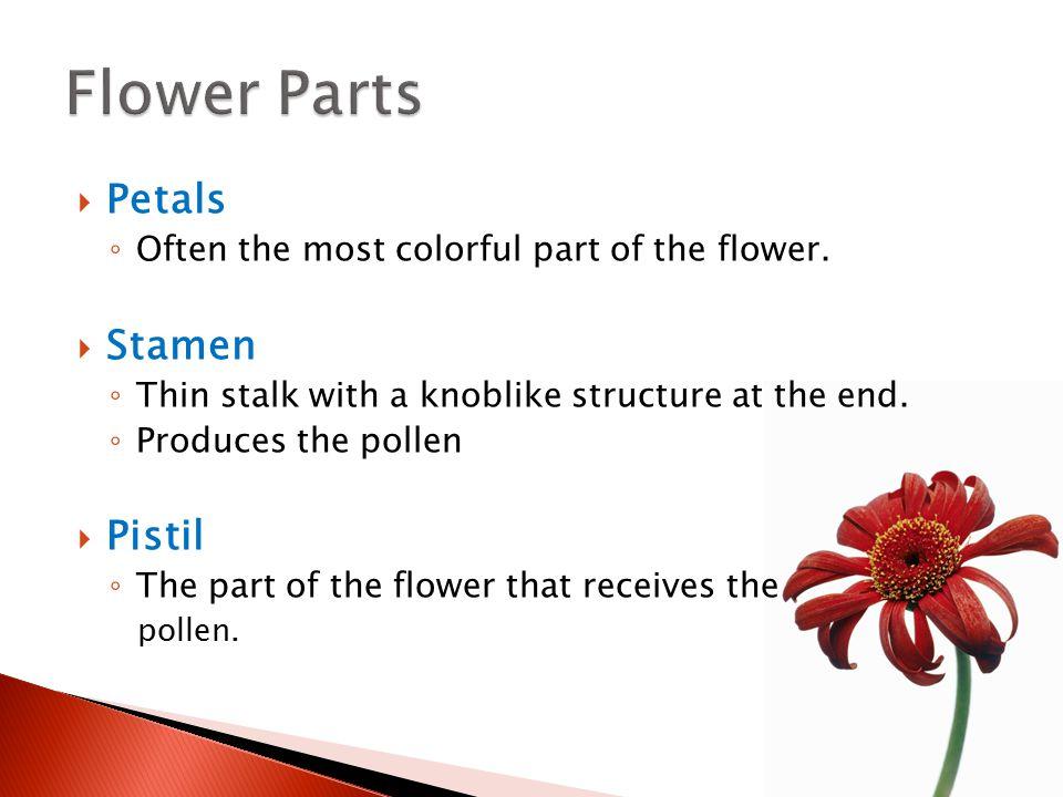 Petals Pistil Stamen Worktext p. 45