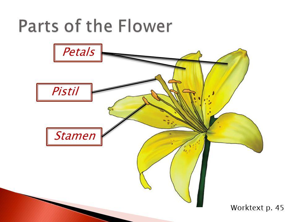  Receives pollen =  Contains seeds =  Has pollen =  Contains stored food = pistil fruit stamen cotyledon Worktext p.