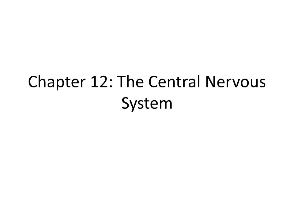 Central Nervous System Brain and Spinal Cord Body's supercomputer Cephalization – elaboration towards rostal towards the snout or anterior portion of CNS Also increase in the number of neurons