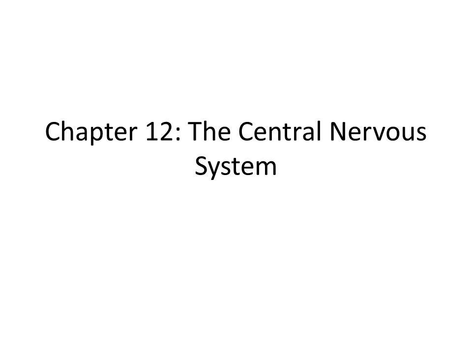 Sensory Areas 3.
