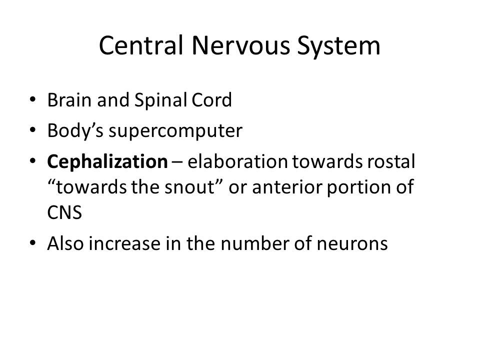 Sensory Areas 4.