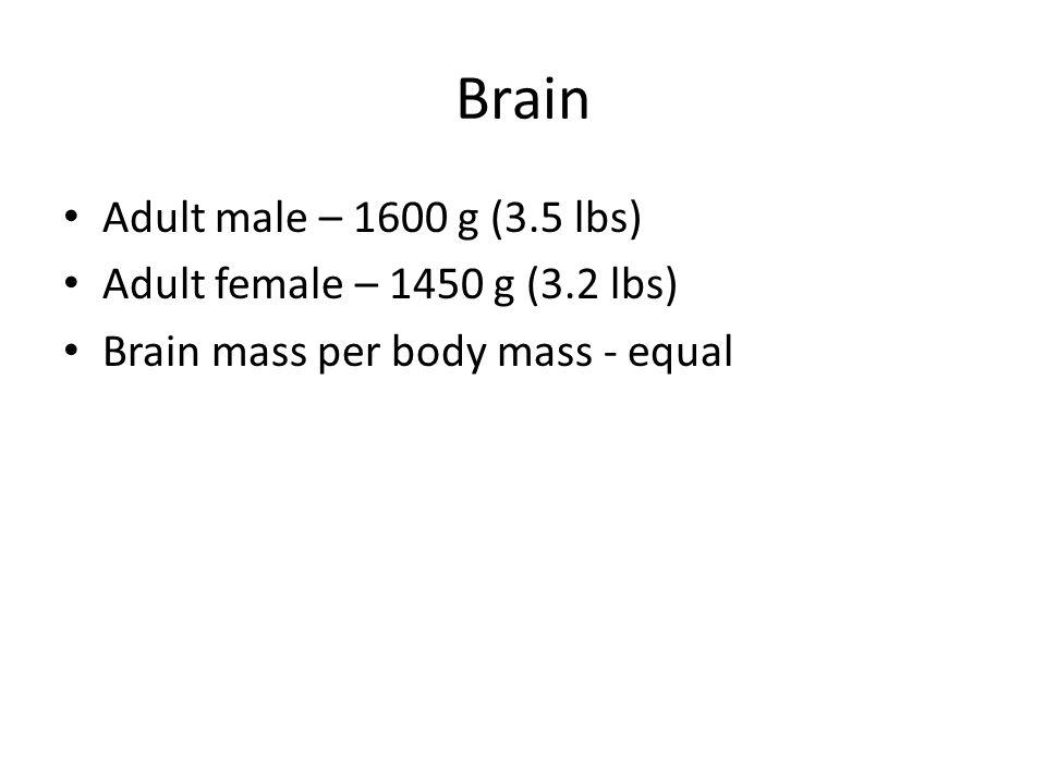 Figure 12.6c Parietal lobe Frontal lobe Right cerebral hemisphere Occipital lobe Left cerebral hemisphere Cerebral veins and arteries covered by arachnoid mater Longitudinal fissure Posterior (c) Anterior