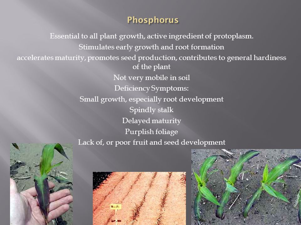 Essential to all plant growth, active ingredient of protoplasm.