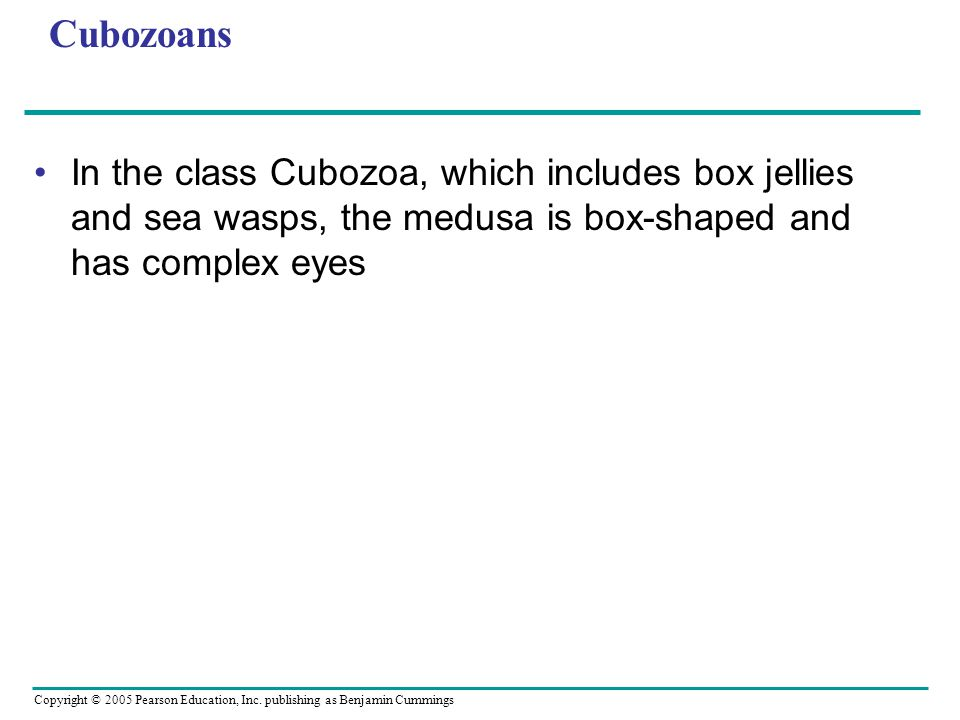Copyright © 2005 Pearson Education, Inc. publishing as Benjamin Cummings Cubozoans In the class Cubozoa, which includes box jellies and sea wasps, the
