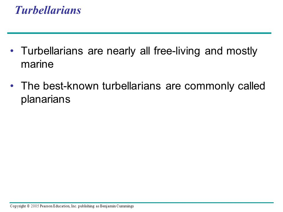 Turbellarians Turbellarians are nearly all free-living and mostly marine The best-known turbellarians are commonly called planarians