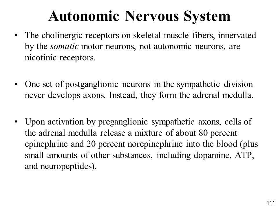 111 Autonomic Nervous System The cholinergic receptors on skeletal muscle fibers, innervated by the somatic motor neurons, not autonomic neurons, are nicotinic receptors.