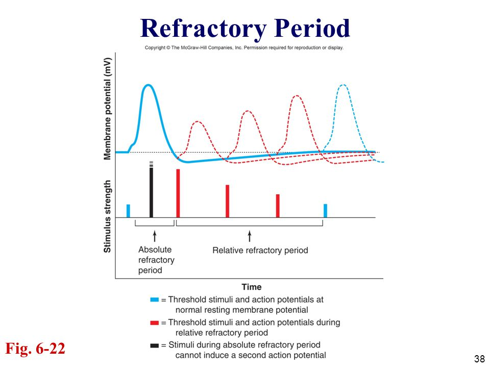 38 Refractory Period Fig. 6-22