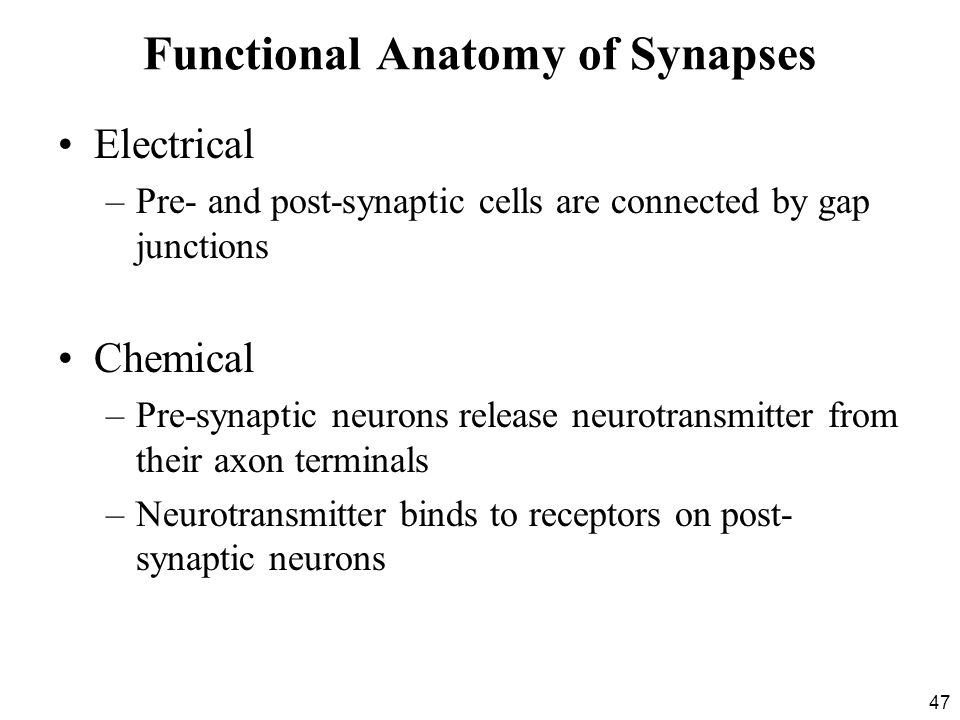 47 Functional Anatomy of Synapses Electrical –Pre- and post-synaptic cells are connected by gap junctions Chemical –Pre-synaptic neurons release neurotransmitter from their axon terminals –Neurotransmitter binds to receptors on post- synaptic neurons