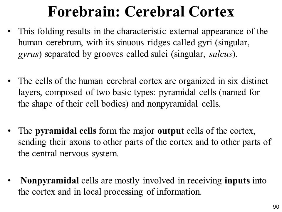 90 Forebrain: Cerebral Cortex This folding results in the characteristic external appearance of the human cerebrum, with its sinuous ridges called gyri (singular, gyrus) separated by grooves called sulci (singular, sulcus).