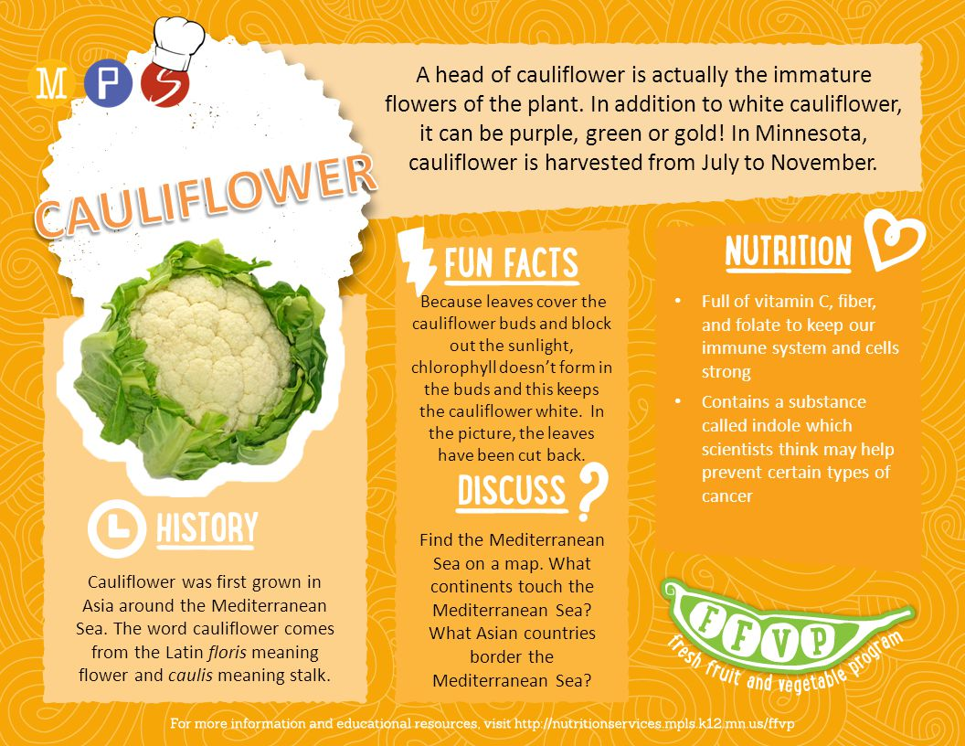 A head of cauliflower is actually the immature flowers of the plant. In addition to white cauliflower, it can be purple, green or gold! In Minnesota,