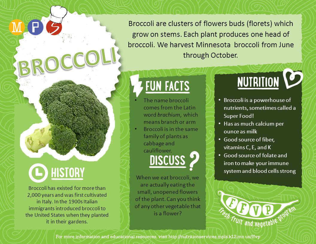 Broccoli are clusters of flowers buds (florets) which grow on stems. Each plant produces one head of broccoli. We harvest Minnesota broccoli from June