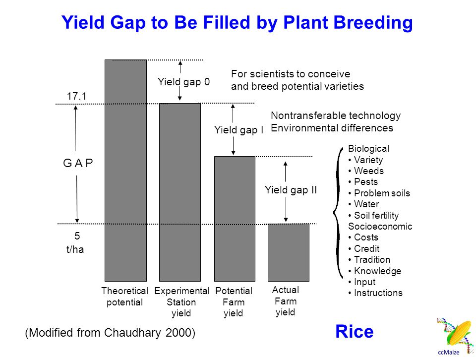 Yield Gap to Be Filled by Plant Breeding Experimental Station yield Potential Farm yield Theoretical potential Actual Farm yield Yield gap 0 Yield gap I Yield gap II For scientists to conceive and breed potential varieties Nontransferable technology Environmental differences Biological Variety Weeds Pests Problem soils Water Soil fertility Socioeconomic Costs Credit Tradition Knowledge Input Instructions 17.1 5 G A P t/ha (Modified from Chaudhary 2000) Rice