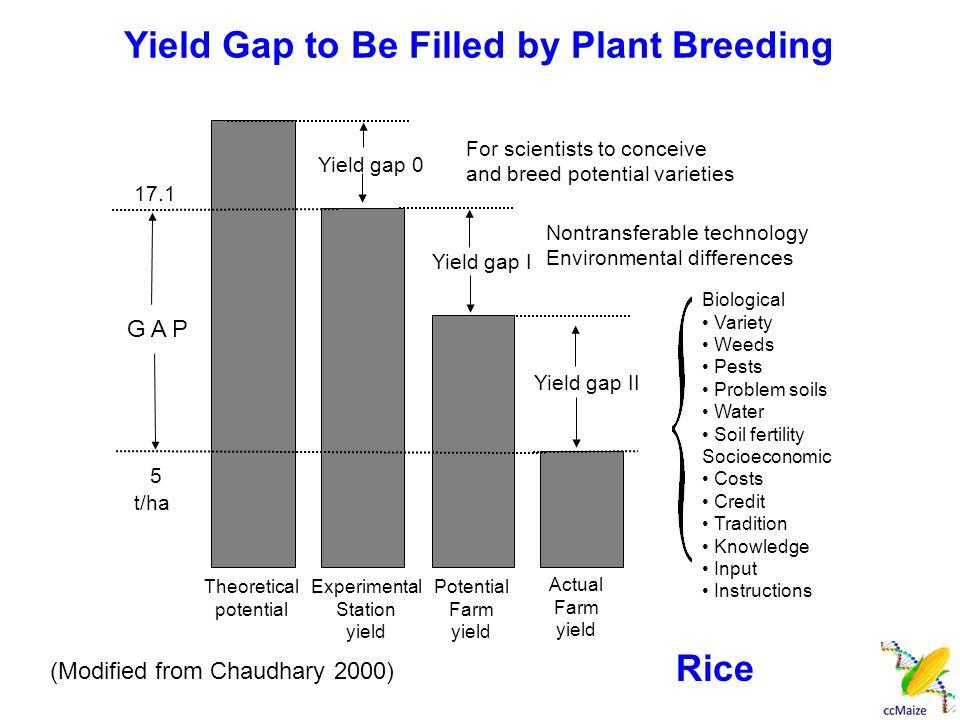 产量潜力的提高和产量差的缩小依赖于各种现代 育种方法和综合的农艺措施。 分子标记辅助育种将发挥重要的作用。