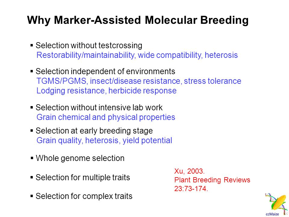  Selection without testcrossing Restorability/maintainability, wide compatibility, heterosis  Selection independent of environments TGMS/PGMS, insect/disease resistance, stress tolerance Lodging resistance, herbicide response  Selection without intensive lab work Grain chemical and physical properties  Selection at early breeding stage Grain quality, heterosis, yield potential  Whole genome selection  Selection for multiple traits Why Marker-Assisted Molecular Breeding  Selection for complex traits Xu, 2003.
