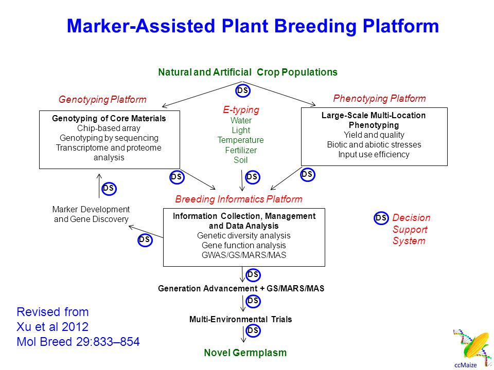 Genetic gains achieved for oil and protein content in 100 generations of selection (Dudley and Lambert 2004) QUESTION Can we achieve the same result in less years with marker- assisted plant breeding?
