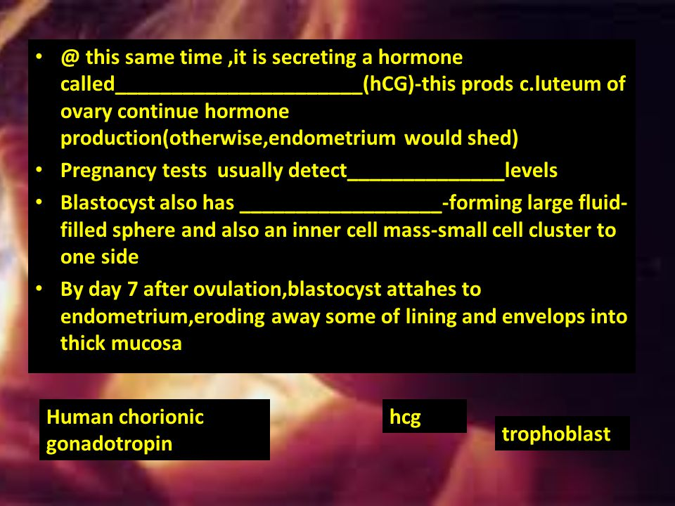 EVENTS OF EMBRYONIC AND FETAL DEVELOPMENT Rapid MITOTIC division as zygote goes down fallopian tube-________________,w/daughter cells becoming smaller