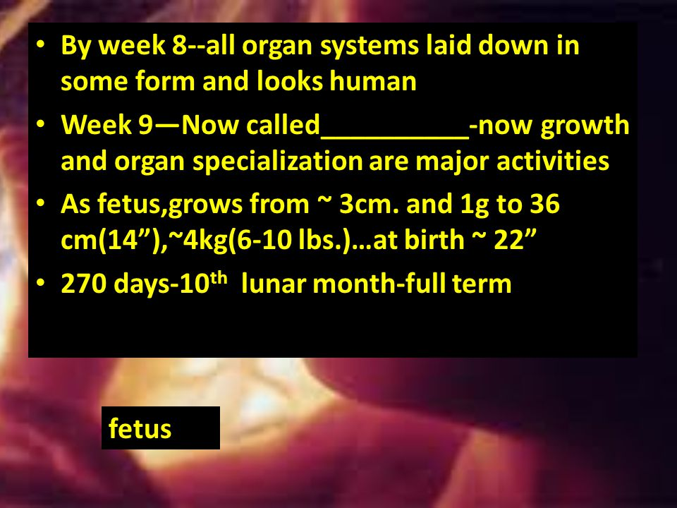 Once placenta has formed,embryonic body is surrounded by_____________________________-fluid –filled sac and attaches w/blood vessel stalk- ___________